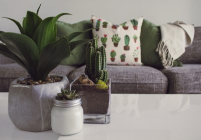 Indoor Plants that Improve Indoor Air Quality